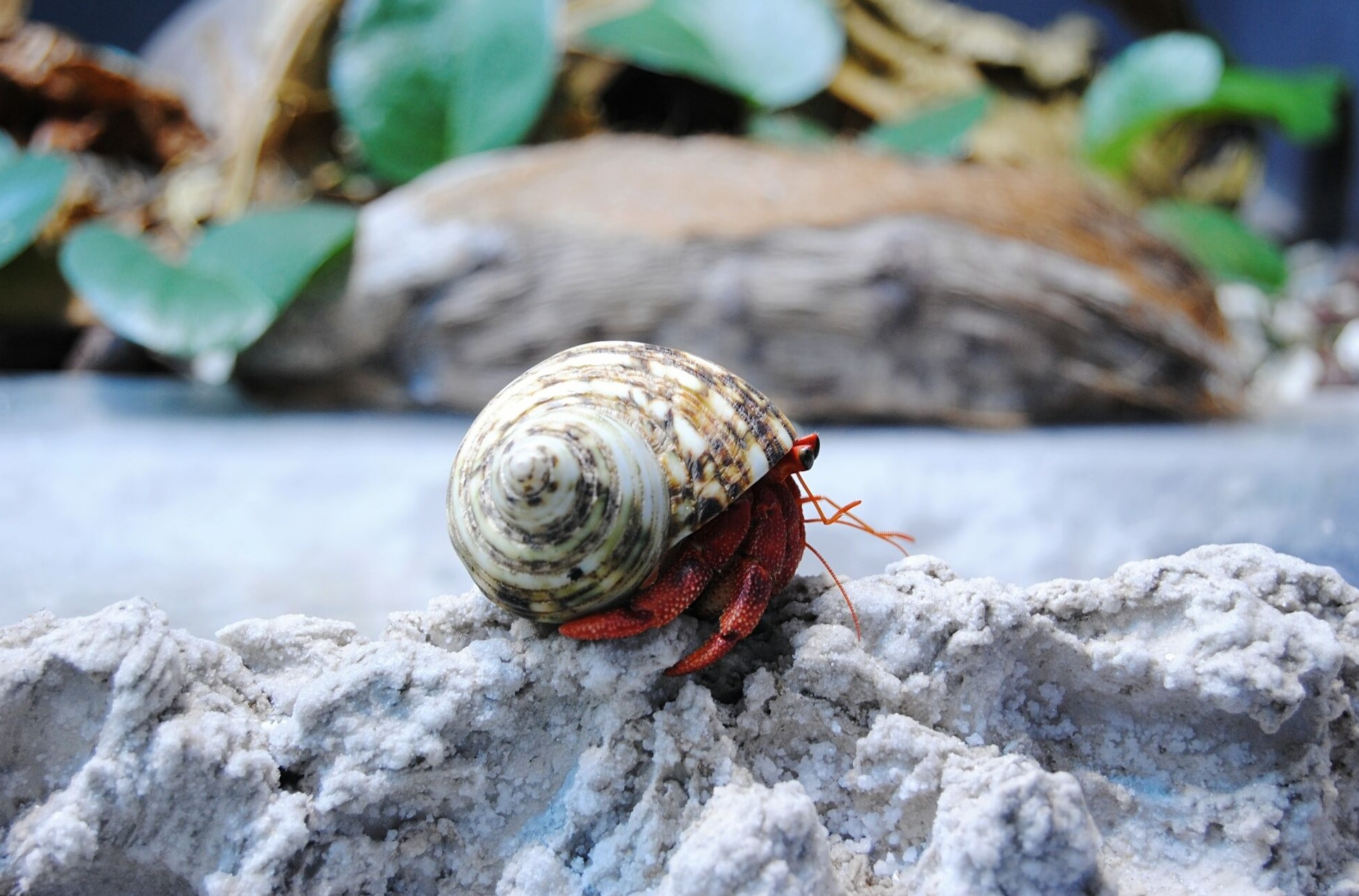 Food and Feeding Guide for Hermit Crabs